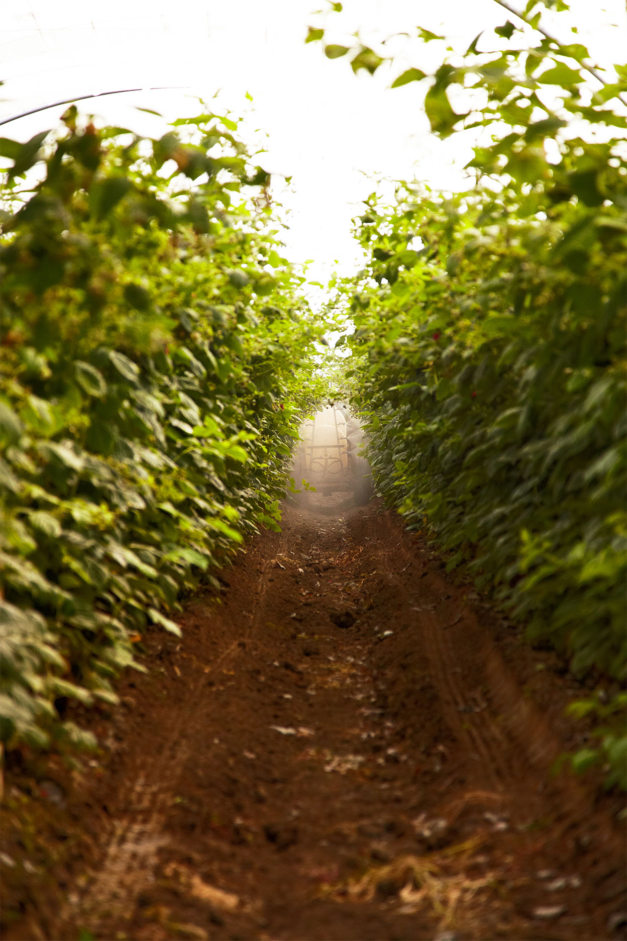 Farm_Spray_Rasberry-Farm_Oxnard_California