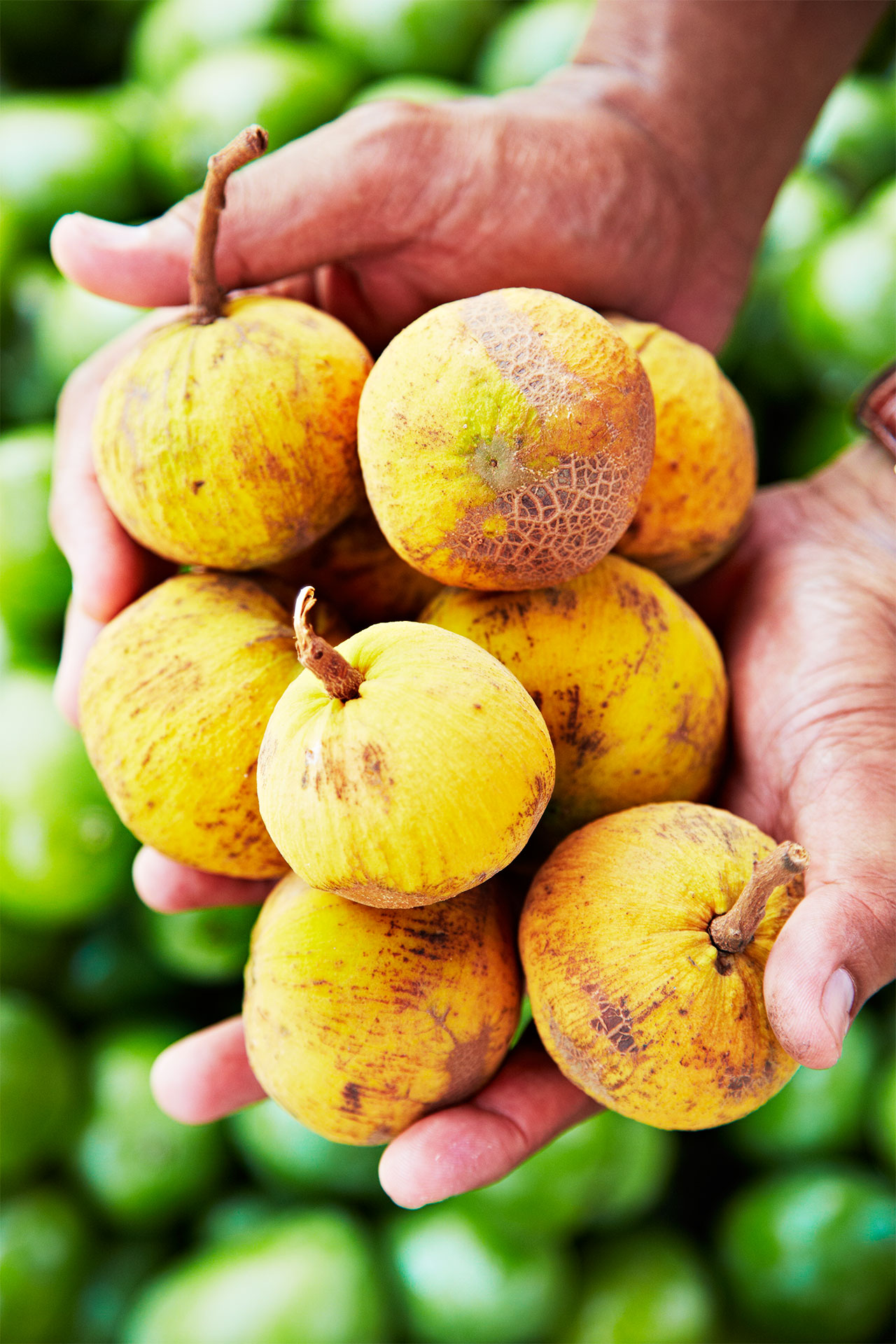 Santol_Philippines_Fruit_Hands-with-fruit_tropical